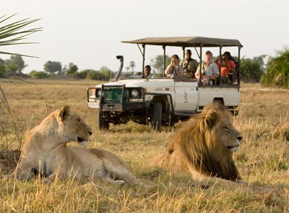 safari-por-africa